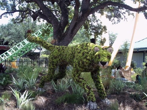 Cheetah landscaping