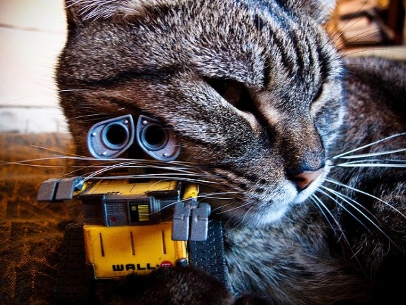 Cat snuggling with WALL-E