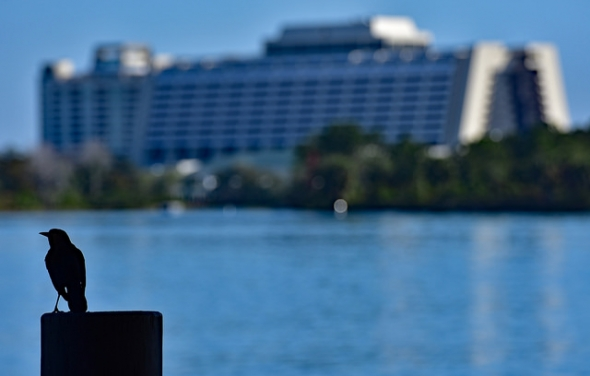 Bird on post in front of Contemporary Resort and Bay Lake