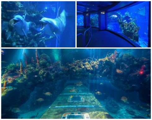 The Seas' Aquariums