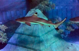 Atlantis Submarine Voyage shark image
