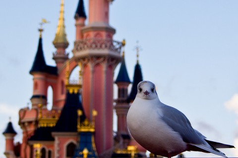 Seagull in front of Cinderella Castle
