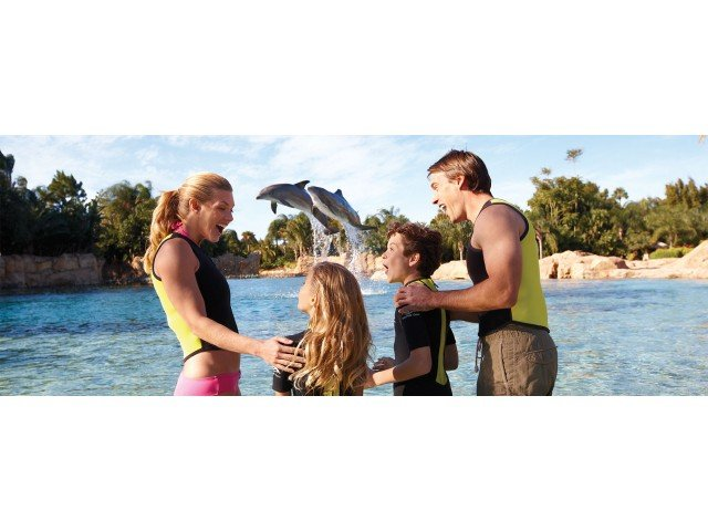 Discovery Cove, Dolphin Jump